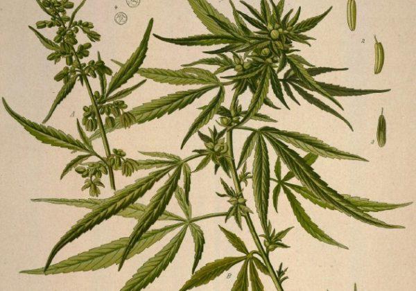 Mezcla de hierbas para fumar con cannabis.